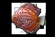 Discus - Aquarium Sand